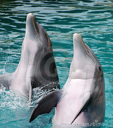 Clapping Dolphins
