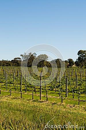 Clarendon Vineyards