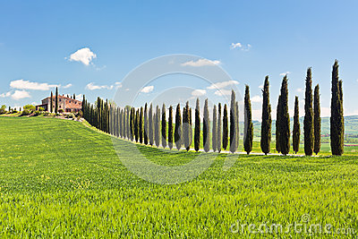 Classic View of Tuscan Farmhouse, Green Field and Cypress Tree R