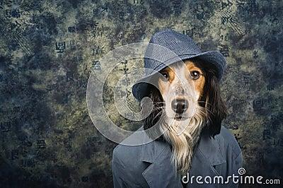 Classy dog