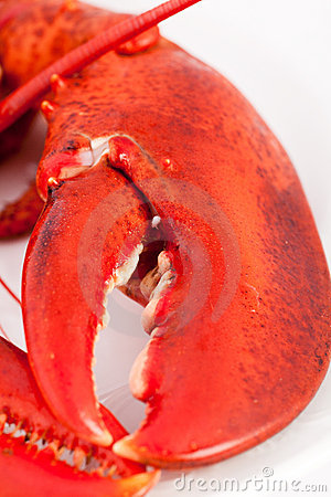 Claw of lobster