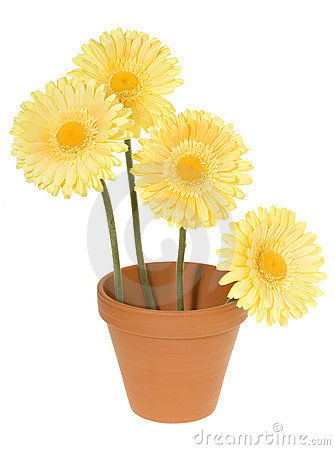 Clay Pot with Yellow Daisies