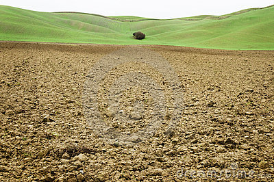 Clay soil field with green background in Tuscany