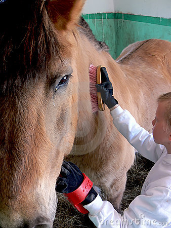 Free Cleaning A Horse Stock Photography - 5210202