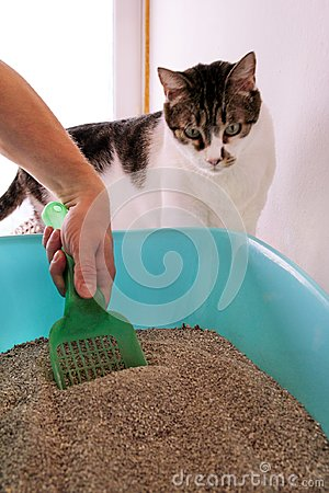 Free Cleaning Cat Litter Box. Hand Is Cleaning Of Cat Litter Box With Green Spatula. Toilet Cat Cleaning Sand. Stock Photo - 108452410