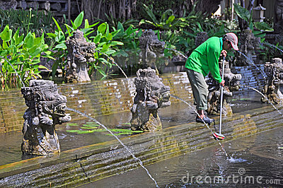 Cleaning the Lilly Ponds, Bali Indonesia Editorial Stock Photo