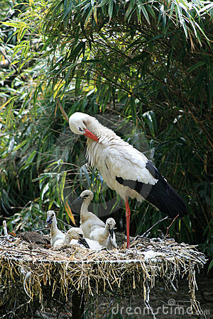 Cleaning stork and chickens