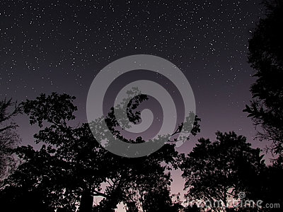 Clear forest night sky at dawn background