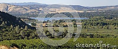 Clear Lake Vineyards