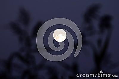A Clear Moon