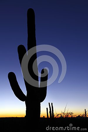 Clear sky saguaro sunset vertical