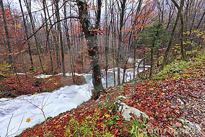 Clear stream and November foliage in the mountains