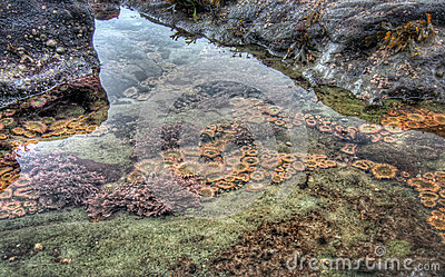 Clear tidal pool with sea life