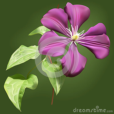 Clematis flower with leaves