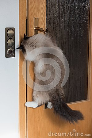 Free Clever Cat Opening The Door Royalty Free Stock Image - 109407806