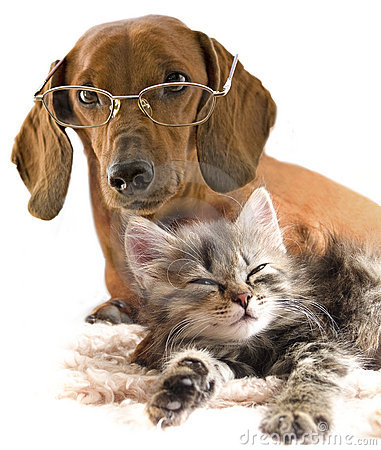 Clever dog in glasses and cat