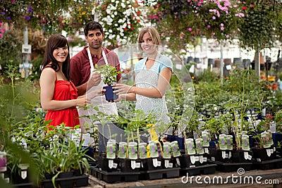 Cliente y trabajadores del invernadero