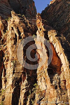 Cliff Detail, Zion