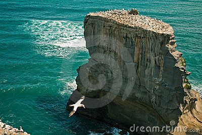 Cliff in the sea with gulls