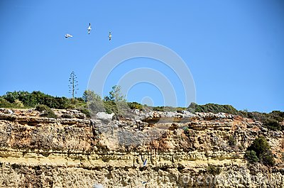 Cliff and seagulls