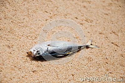 Climate Change - Dead Fish