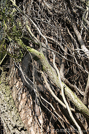 Climber thicket
