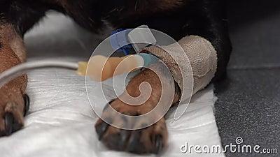 Clinica veterinaria video d archivio