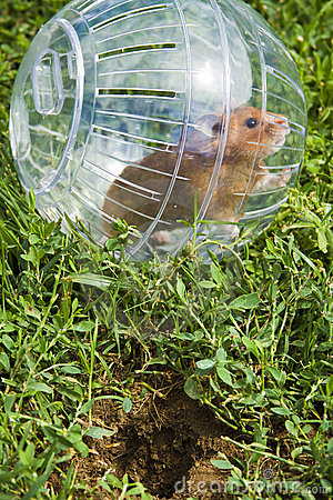 So close but so far away, hamster ball
