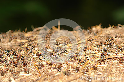 Close up of ants nest