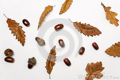 Close-up Of Autumn Leaves Over White Background Free Public Domain Cc0 Image