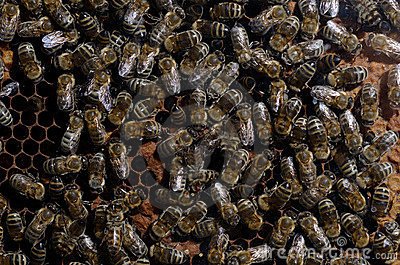 Close up of bee family