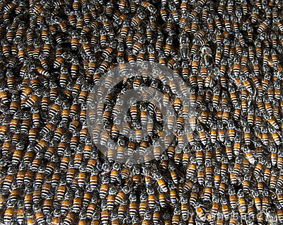 Close up of bee insect in beehive