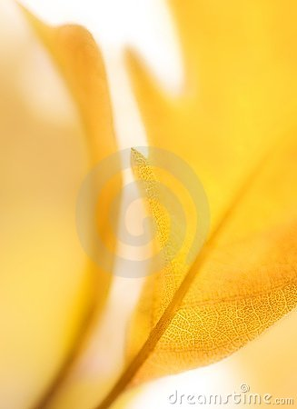 Close Up Of Blurred Tree Leaf