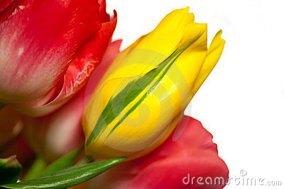 Close up of bouquet of pink and yellow tulips