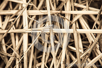 Close-up branch of wheat
