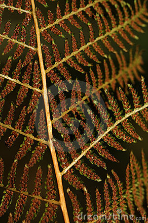 Close-up of brown fern leaf