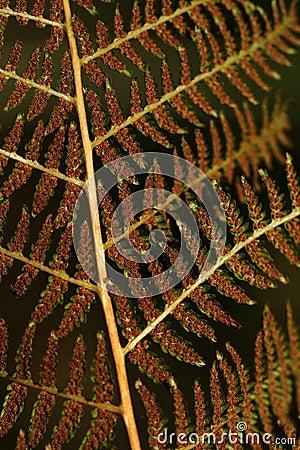 Close-up of brown fern leaf