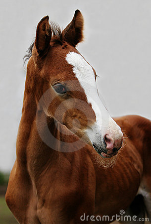 Close up of brown foal