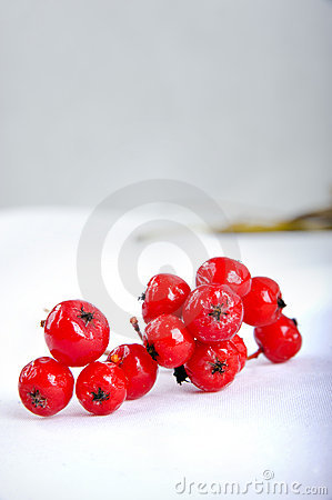 Close up of bunches of rowan berries