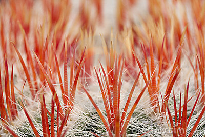 Close up of an cactus