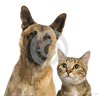 Close-up of a cat and dog