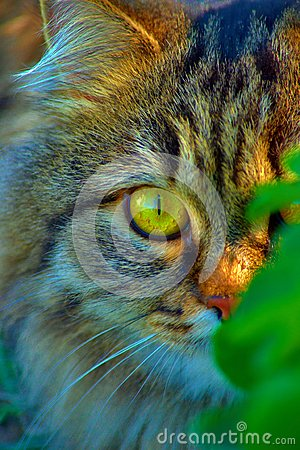 Close-up of a cat in the grass