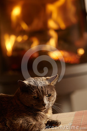 Close Up Of Cat Relaxing By Cosy Log Fire