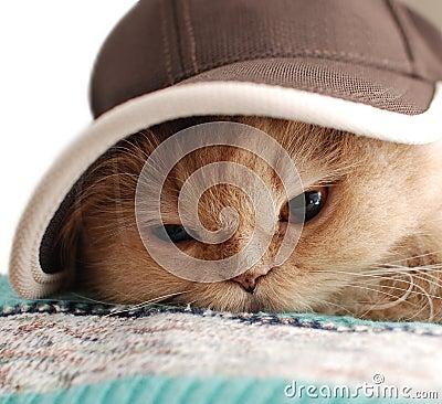 Close-up cat wears a hat