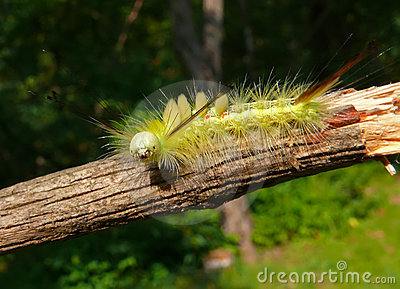 Close-up of Caterpillar 20