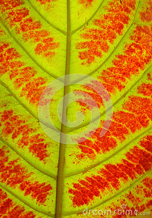 Close up of colorful autumn leaves texture