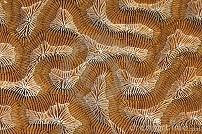 Close up coral,roatan,honduras background texture