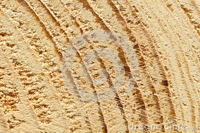 Close up da textura áspero-desbastada do pinheiro