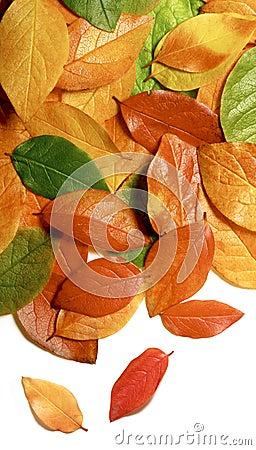 Close-up das folhas de outono