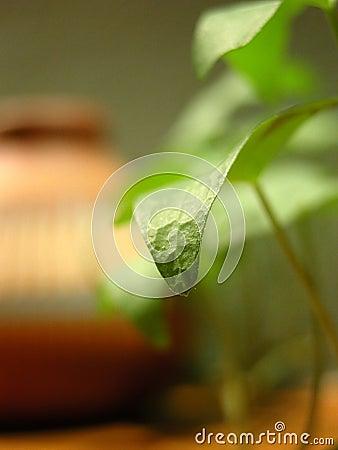 Close up de uma folha verde